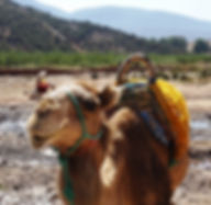 Atlas Camel Trek (5).jpg