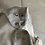 Thumbnail: iobio Baby Sommer Schlafsack Bio-Baumwolle grau-ecru 70 cm