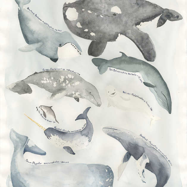 Endangered Whales