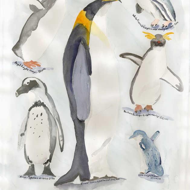 Endangered Penguins