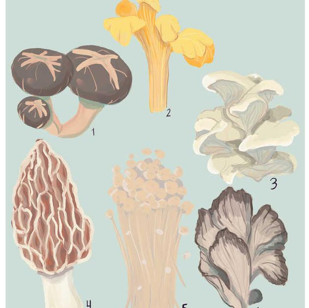 Edible Mushrooms Inforgraphic
