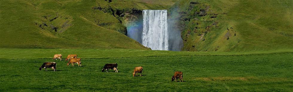 skogafoss-waterfall-summer-icelandic-lan