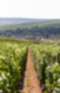 Champagne_Girardin_-_Tristan_Meunier_-_E