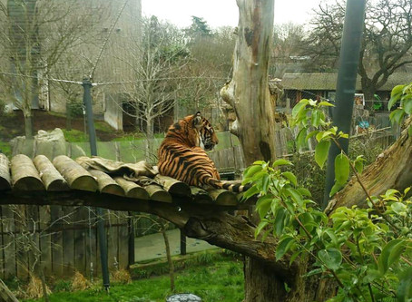 TAKING A TRIP TO LONDON ZOO