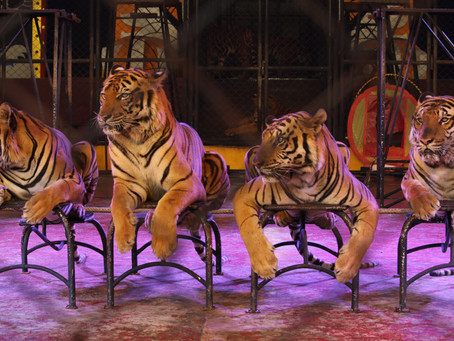 SRIRACHA TIGER ZOO TO CLOSE ITS DOORS?