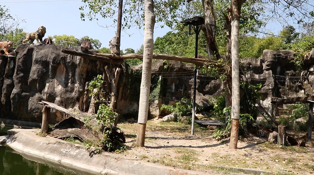 Tiger enclosure Thailand
