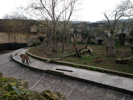 PRAGUE ZOO ON NEW YEAR'S EVE