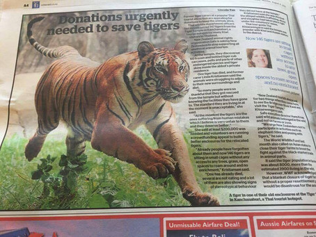 Follow the Tigers campaign hits the news!