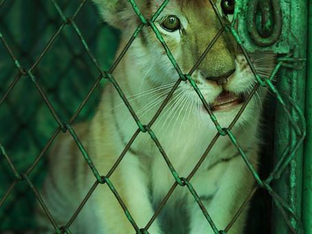 Thailand's Tiger Facilities
