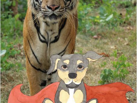 ROXI ROARS FOR TIGERS