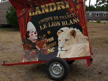 CIRQUE DE DENIAL - WHY ARE TRAVELLING CIRCUSES STILL HAPPENING?