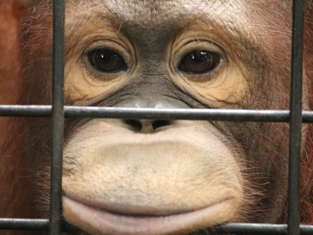 WAZA resolves to close Pata Zoo, but can it really be done?