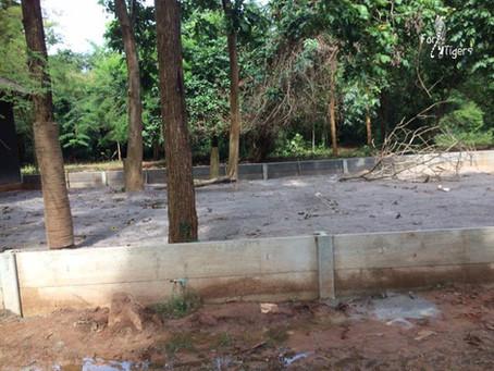 Tiger Temple tigers: Continuing progress