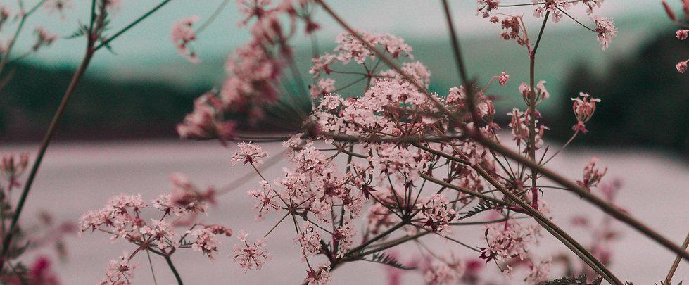 Árbol con flores en blanco y negro