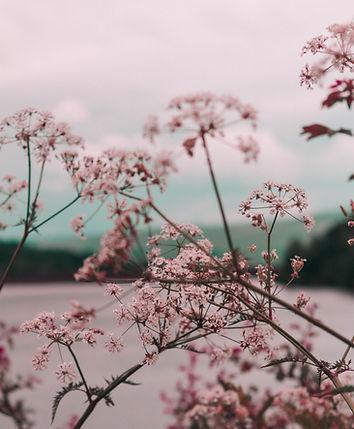 lyserød blomst
