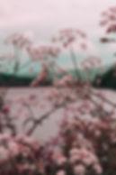 shiatsu manchester