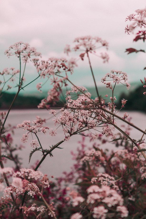 pinke Blume
