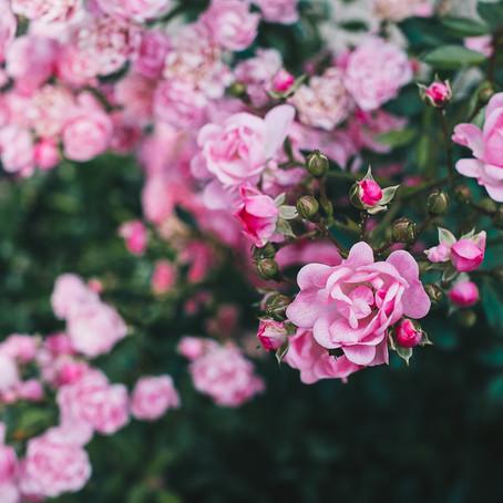 Jardin en permaculture : analyser son sol pour mieux le connaître
