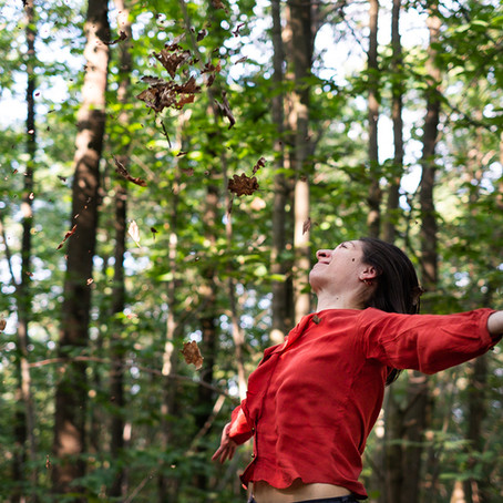 Planter des arbres : reportage photo en pleine forêt