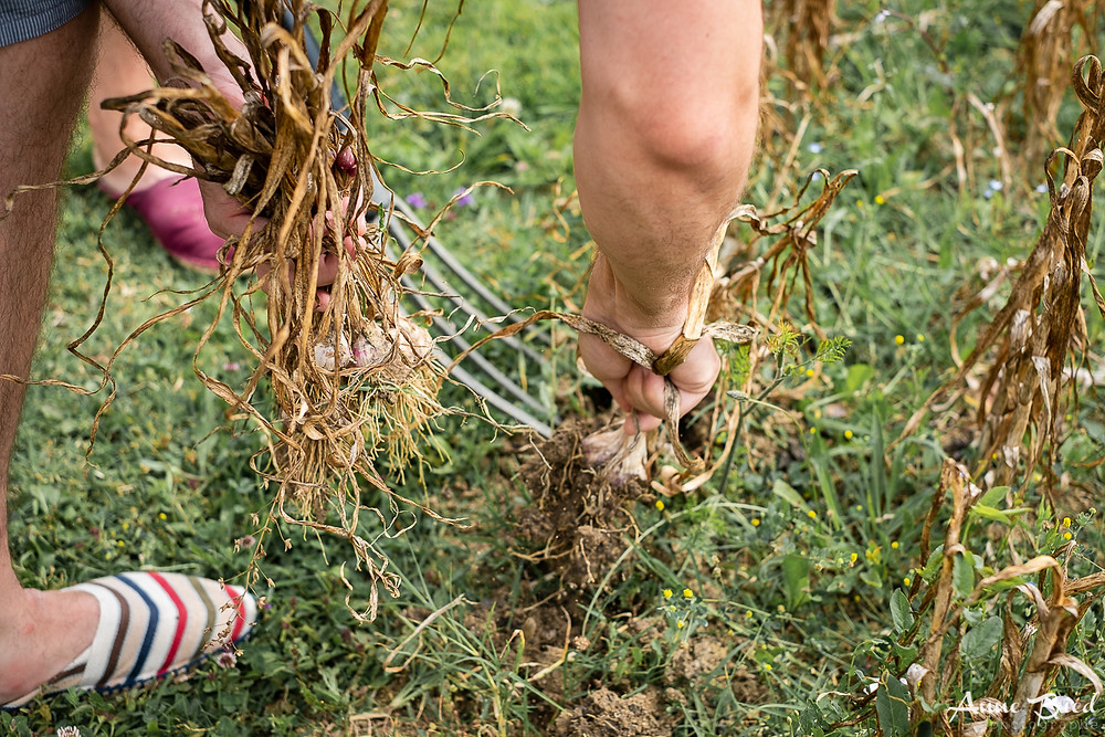 reportage photo permaculture - anne bied - photographe reporter paris - photographe permaculture gers - photo reportage france