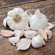Susanville - 1/4 lb Seed