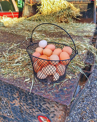 The weather has played havoc on our egg
