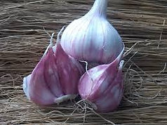 Persian Star - 1/4 lb Seed