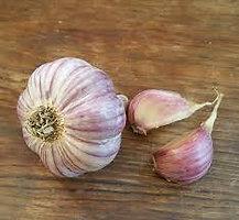 Early Italian Purple- 1 lb Culinary
