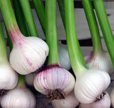 Garlic Goodness