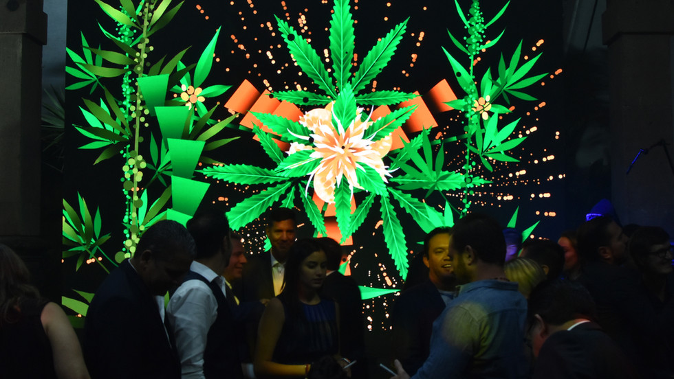 Rimiyoho-Cannabis-3-CBD-Life.jpg