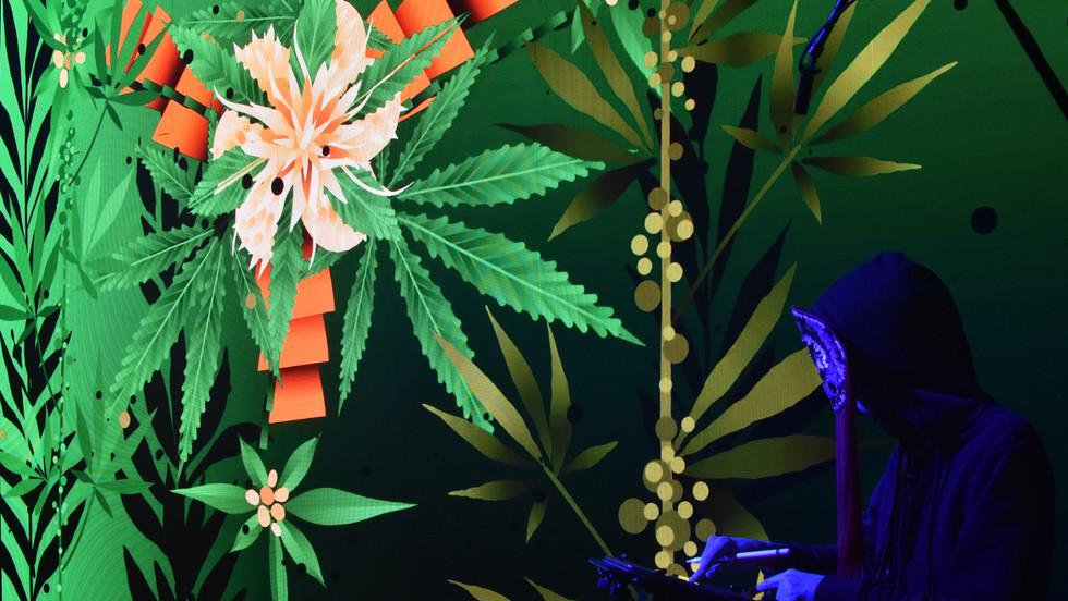 Rimiyoho-Cannabis-2-CBD-Life.jpg