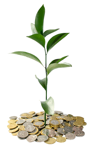 coins plant.png