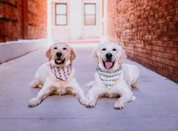 Revan and Roxy Spring Photoshoot