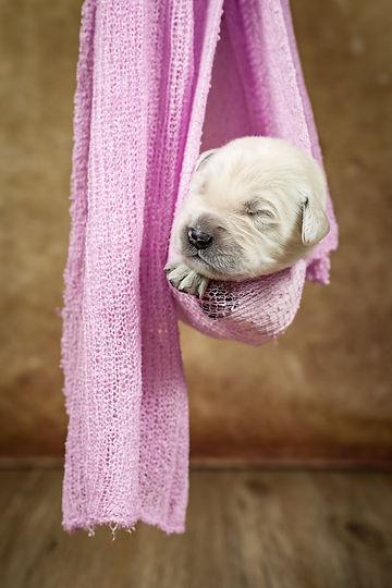 Pink Puppy Wrap.jpg