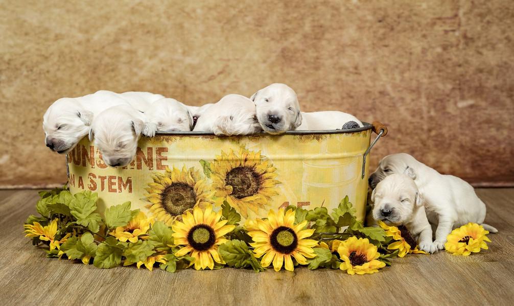 golden borealis bucket.jpg