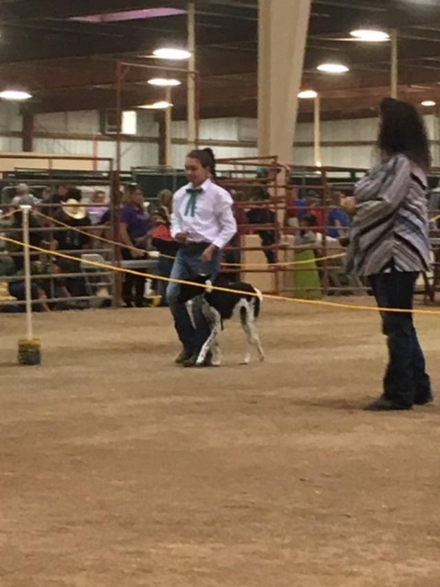 Shelby in the Showmanship Ring