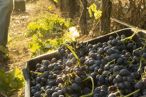 风土与葡萄酒酿造学