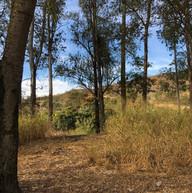 Parque do Sabia - Esmeraldas (3).jpg
