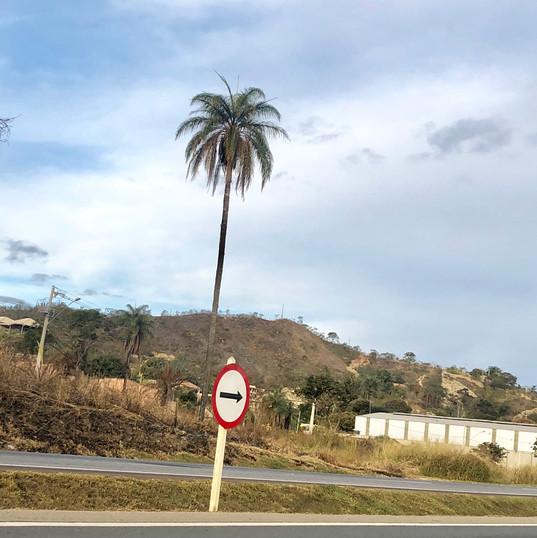 Parque do Sabia - Esmeraldas (40).jpg