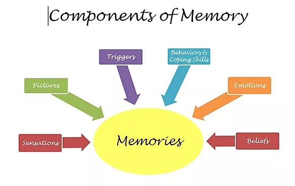 Components_of_Memory.jpg