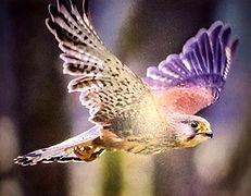 Contact_oiseau_edited.jpg