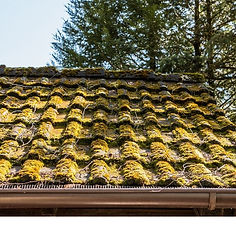6 reasons to go moss free on your roof