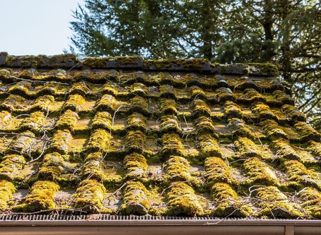 6 Reasons Your Roof Should Be Moss Free