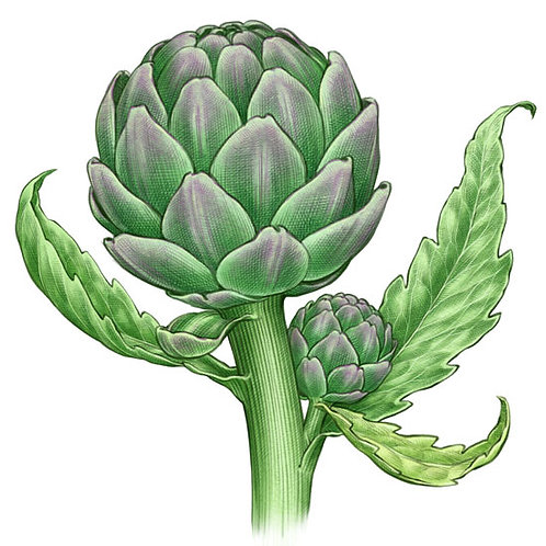 Choked up- All About Artichokes!