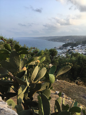 view of sea and cactus.JPG