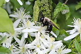 bee and garden.JPG