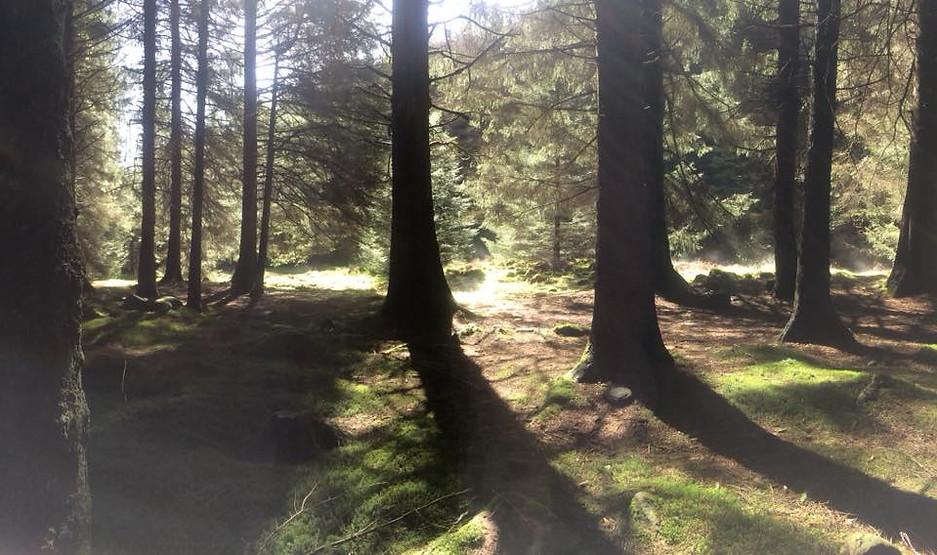 Woodland Waterfalls1.jpg