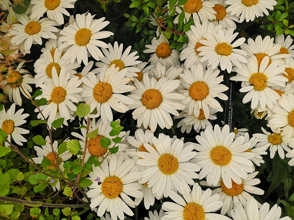 GALLERY : FLORAL