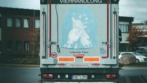 Vigil with Schwerin Animal Save