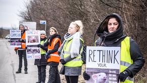 First vigil in Denmark at Northern Europe's biggest slaughterhouse!